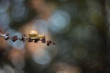 Schnecke in stimmungsvolles Licht. von Francis Dost