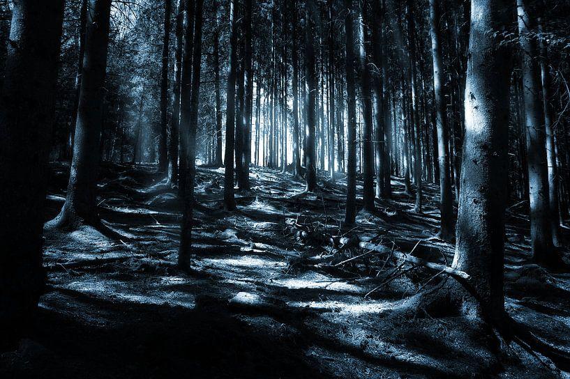 Forêt Noire sur Jan Brons