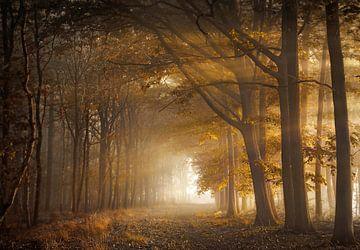 Fortune forest sur Rob Visser