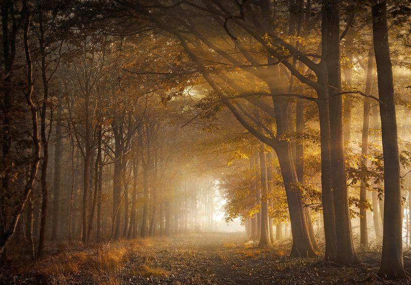 Fortune forest van Rob Visser