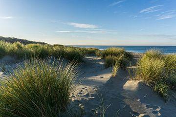 Helmgras op het strand bij Renesse en de Noordzee van Ricardo Bouman