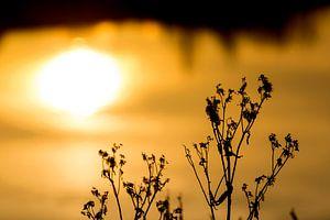 Waterplant tegen een gouden achtergrond van