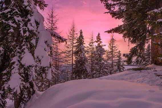 Zonsondergang in een bos in de sneeuw in Lapland