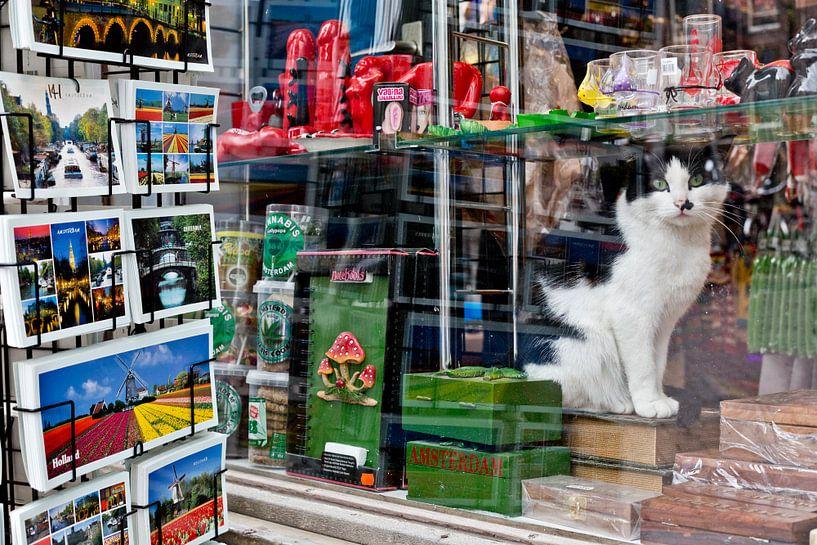 Amsterdam Shopcat van Robert van Willigenburg