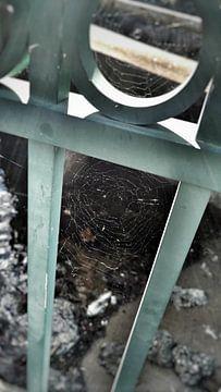 WEBS sur John Velez