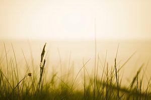 Blades of grass by the sea von Tom Keysers