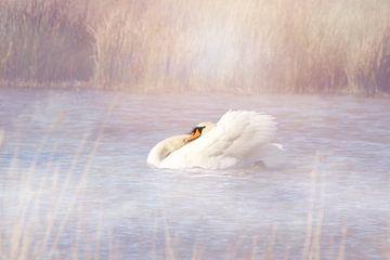 Boze zwaan in de vroege ochtend van Angelique van Vliet