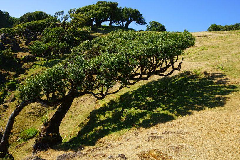 Kromme boom van Michel van Kooten