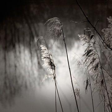 Relaxing Nighttime von Lena Weisbek