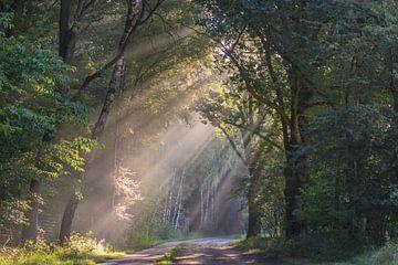 ein Licht erhellen von Tania Perneel