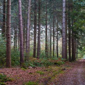 Forest Path Geijsteren van William Mevissen