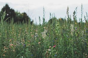 Wildflowers van iris hensen