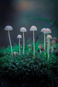Pilze im Wald von Jayzon Photo