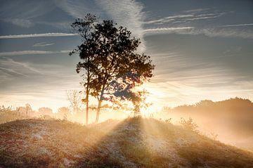 Sonnenaufgang an einem nebligen Morgen. von Hille Bouma