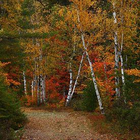 étals d'automne sur lieve maréchal