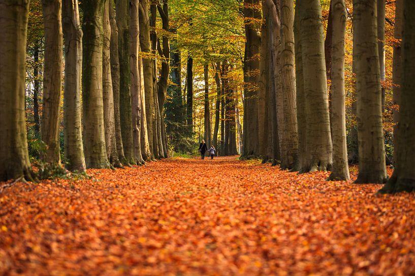 The Autumn lane van Marc Smits