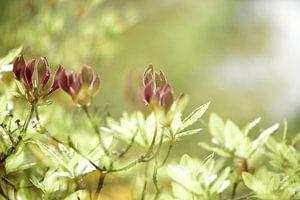 Bloemen van Annet van Esch