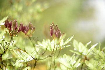 Blumen von Annet van Esch
