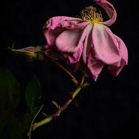 Mooi in verval van Ineke VJ