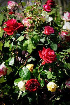 bloemen - boeket rozen - Nederland van
