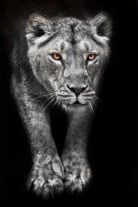 Löwin mit ausgestreckten Pfoten in verfärbten Mondlicht und glühenden Augen isoliert schwarzen Hinte von Michael Semenov