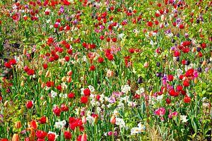 Wilde bloemen/ wild flowers