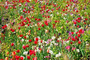 Wilde bloemen/ wild flowers van Ger Nielen