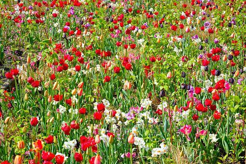 Wilde bloemen/ wild flowers van