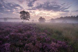 Sonnenaufgang über der blühenden Heidelandschaft von Raoul Baart