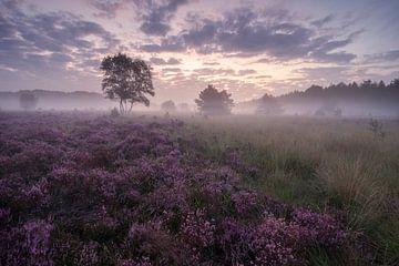 Sonnenaufgang über der blühenden Heidelandschaft