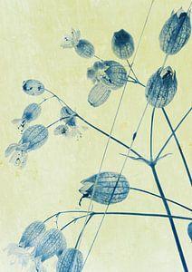 Wilde plant Blaassilene van