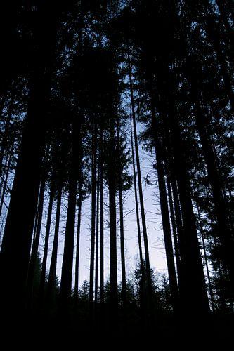 Hoge bomen in de Vogezen van