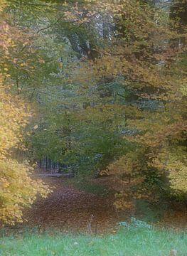 Herfst van Roland Swennen
