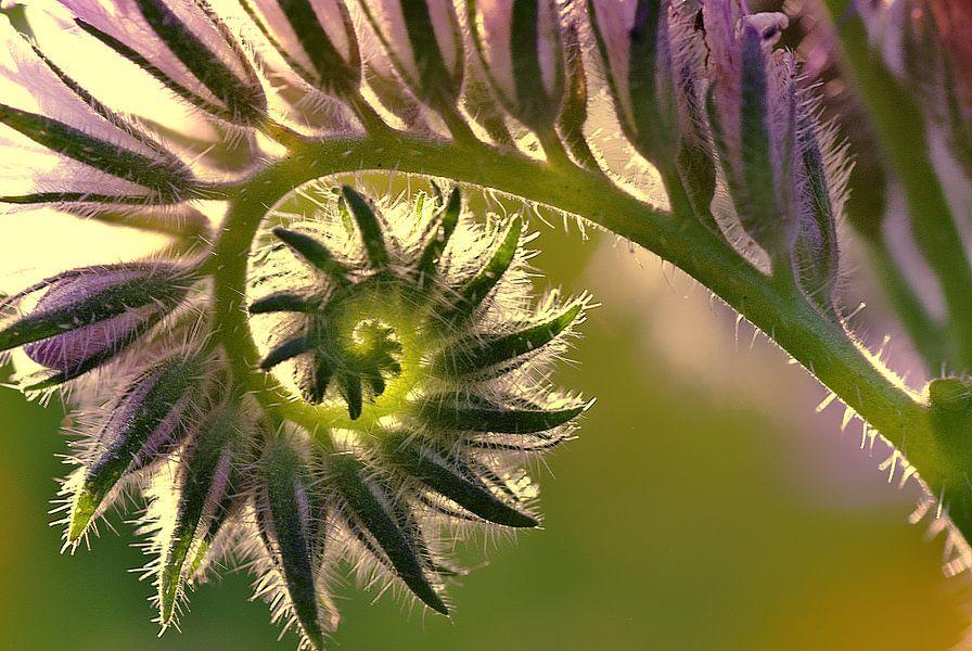 Fibonacci van Cas van den Bomen