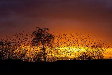 Starling sunset van Yvonne van der Meij