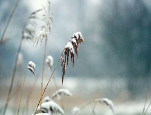 Sneeuw, Winter Strong ...