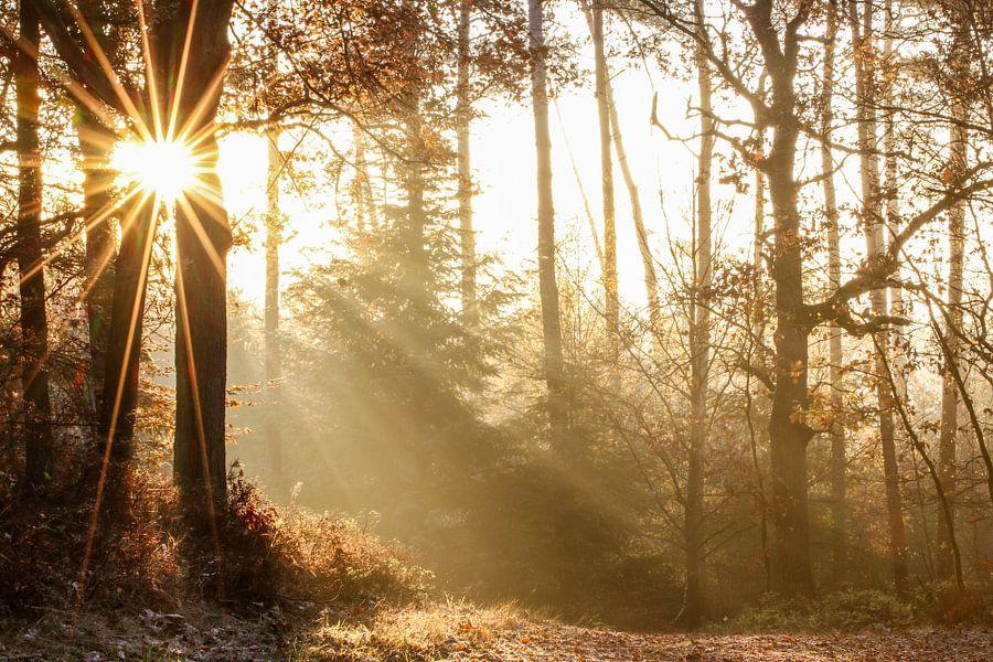 Zonsopkomst op een herfstige Veluwe van Richard Kortland