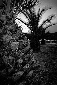 Palmbomen in het zwart wit. van Tuur Wouters