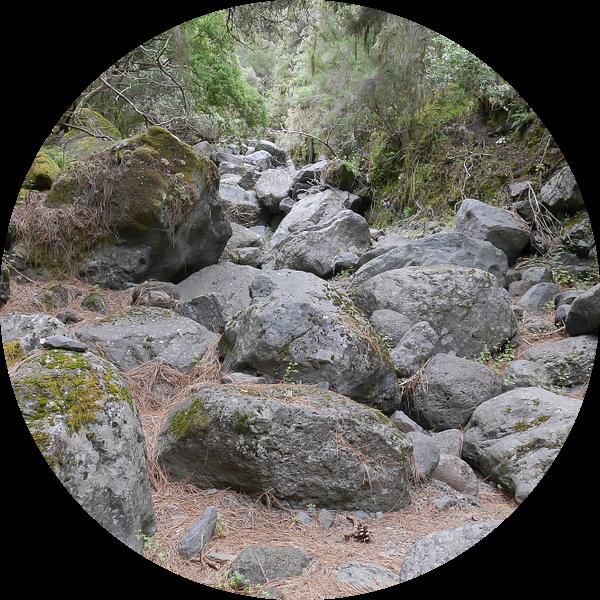 Betoverd bos van Carola van Rooy