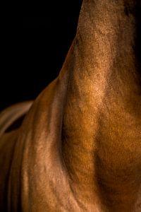 Close-up paard 8