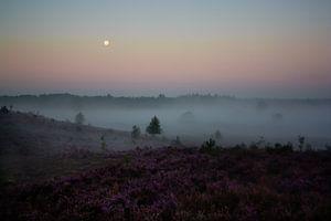 Heather landscape at sunrise