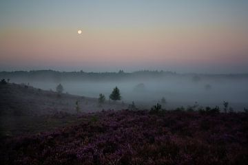 Mistig heidelandschap bij zonsopkomst van Evelyne Renske
