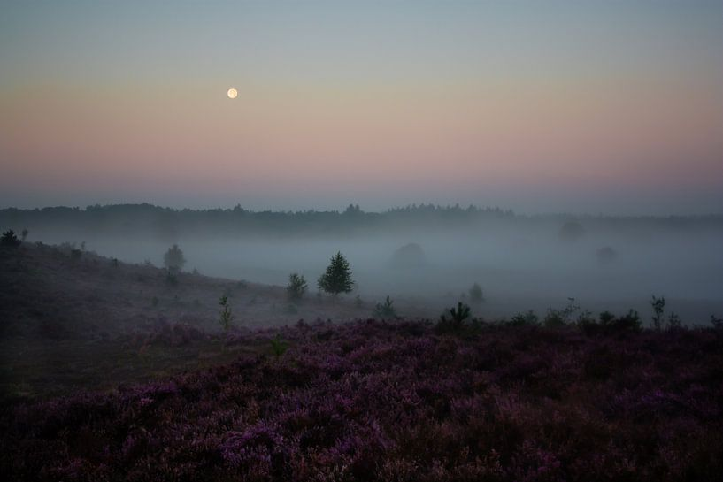 Heather landscape at sunrise von Evelyne Renske