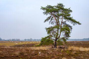 Baum auf Schafweide von Johan Vanbockryck