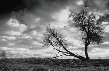 Schwarzer Baum von Jan Koppelaar