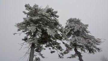 Winter - Bäume - Schnee von Henriette Tischler van Sleen