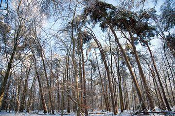 Rucphense bossen van Emel Altin