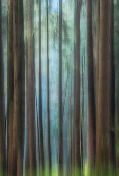 Wonderbos - Schilderachtige bos foto