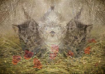 Katzen und Natur von Andreas Schulte