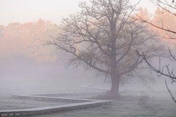mist over het beekdal van Tania Perneel